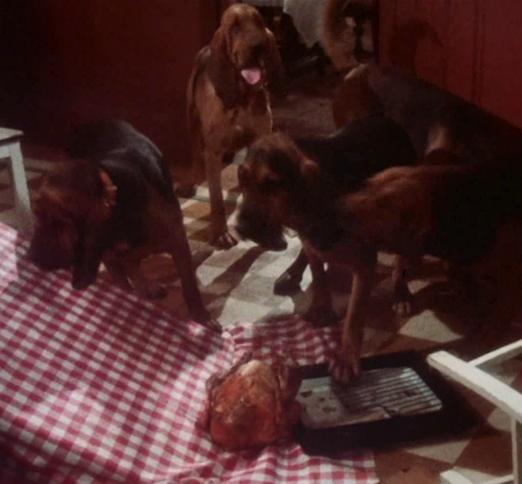 1983-11-18_022_bumpus_hounds.png